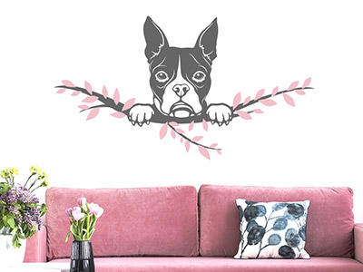 Wandtattoo Boston Terrier